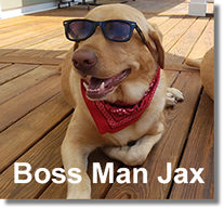 Boss Man Jax
